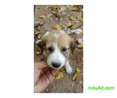 Puppies for adoption - free