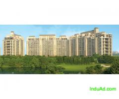 DLF Regal Gardens - Ready to Move-In Luxury Apartments